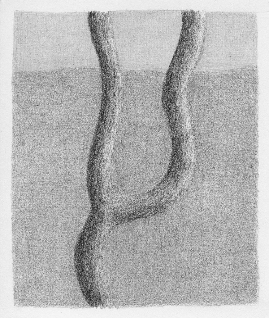 Boom te Bergen, potlood op papier, 19 x 16 cm, 2006